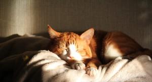 La sieste du chat, son activité favorite dans votre camping car