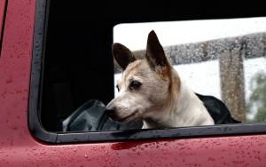 Les chiens et les fenêtres, une grande histoire